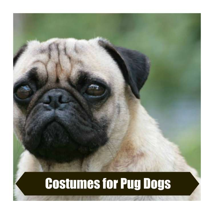 Costumes For Pug Dogs Paws Right Here