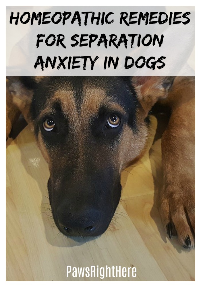 how to give a dog a homeopathic remedy