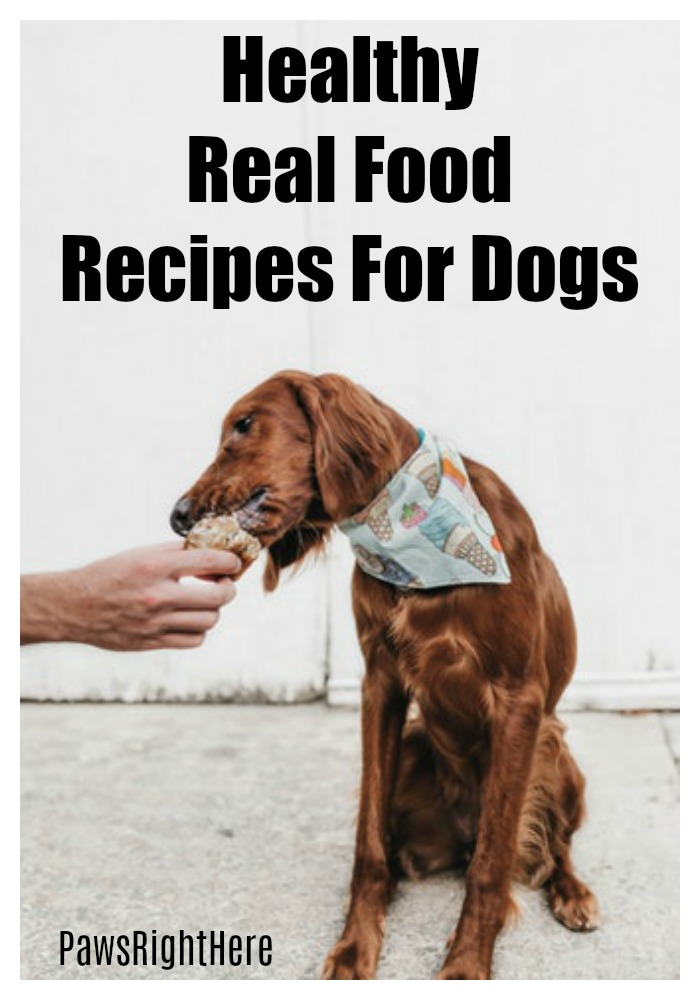 Real food recipes for dogs
