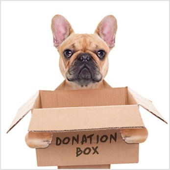 Dog holding a donation box.