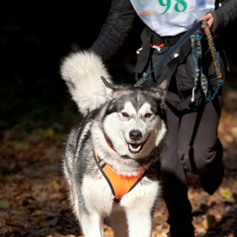 Racer runs with her dog in a canicross race.