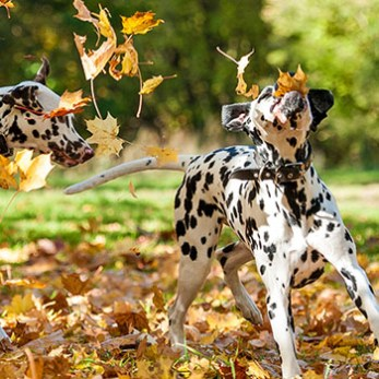 A selection of our favorite dog friendly activities and events for Fall 2017.