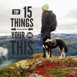 Top 15 Things To Do With Your Dog This Fall-Winter