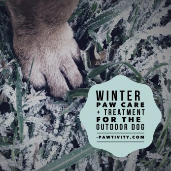 Winter Paw Care And Treatment