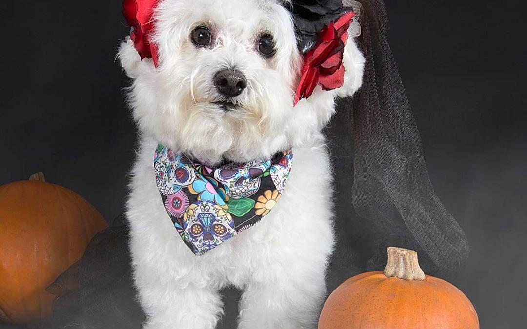 Halloween: your dog & fireworks