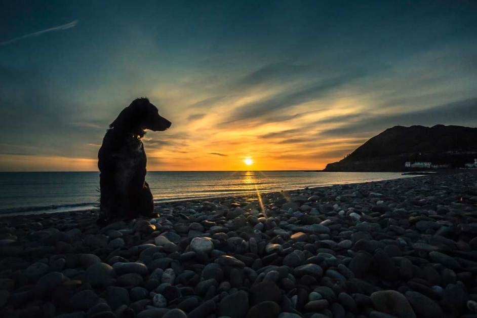 dog silhouette on beach