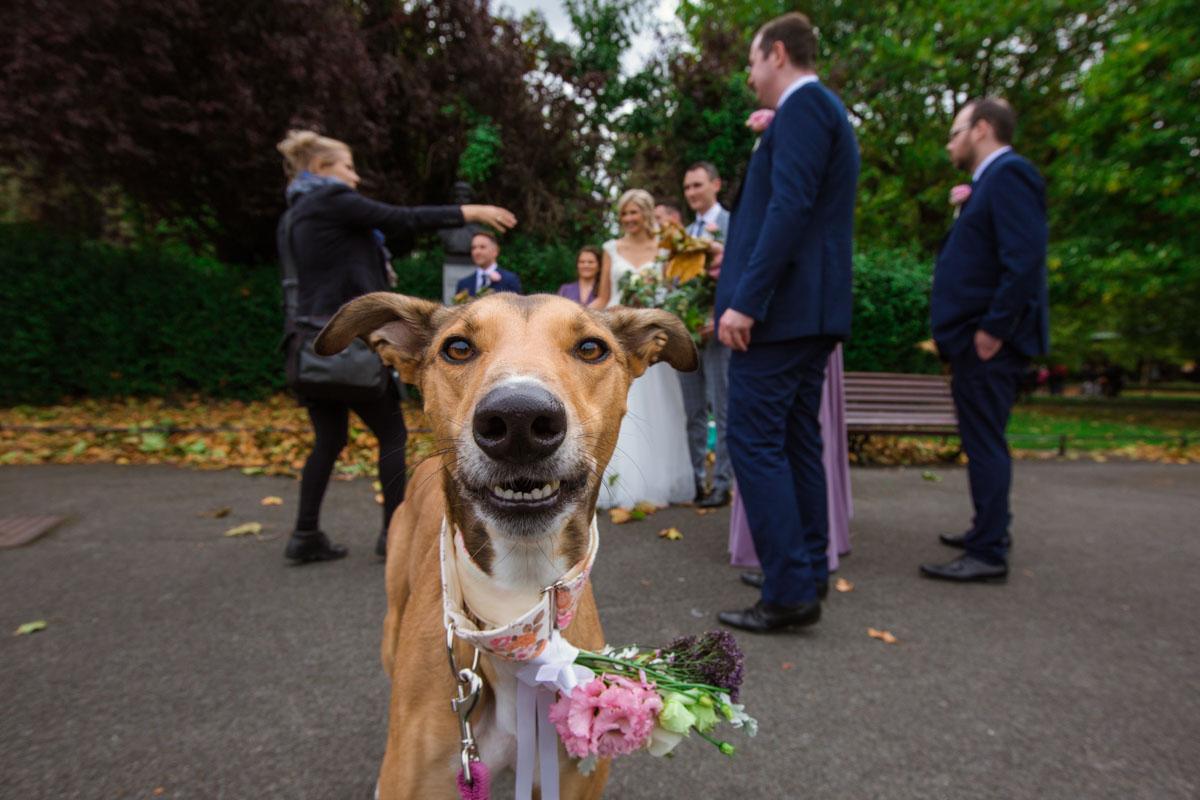 Pet photography Ireland by Pawtrait by Audrey Dalton Photography
