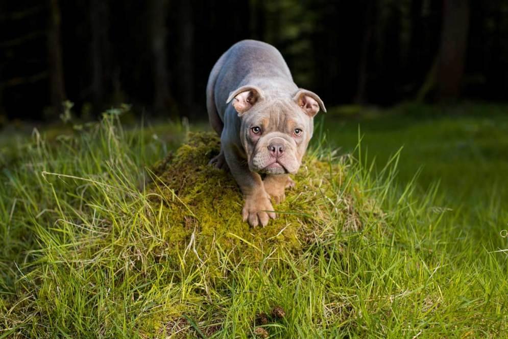 Pet photographer Ireland offering professional pet photography