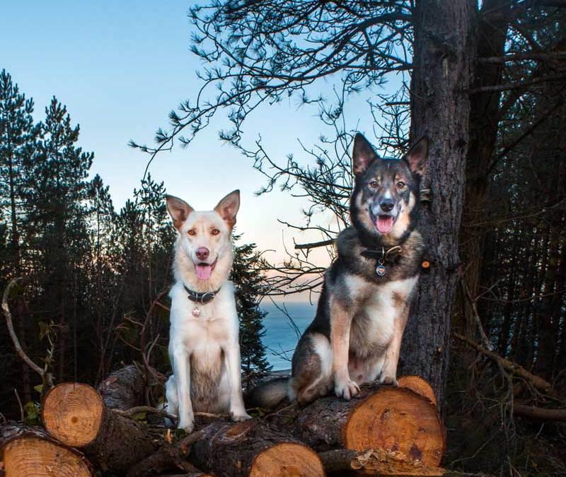 Susie & Sam: a woodland of colour