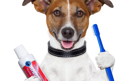 How To Clean Your Pet's Teeth