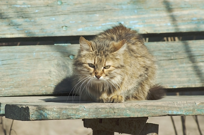 Feral cat sitting on bench