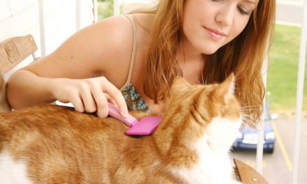 Dodge the Furry Bullet: How to Avoid Hairballs
