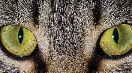 A Look at Cat Vision
