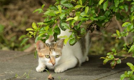 Unwanted Gifts: Dealing With Your Cat's Latest Kill