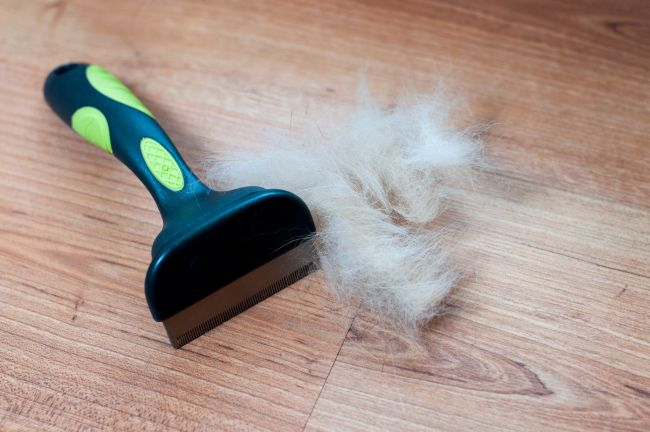 Practical Uses for Pet Hair