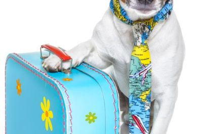 Living the Good Life:  Pet Experiences at High-End Recreation Centers