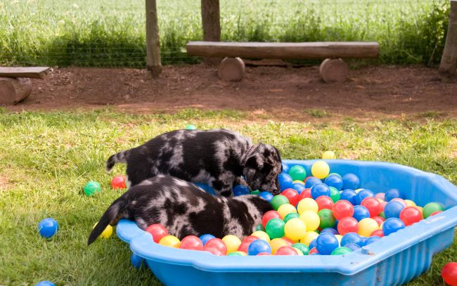 5 Pros & Cons About Doggy Daycare