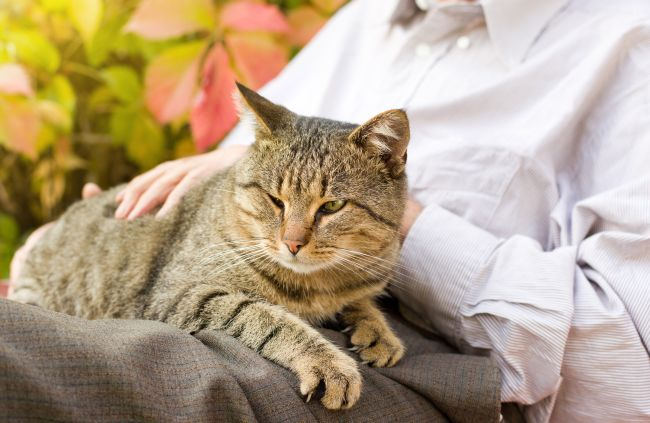 Best Cat Breeds for Pet Therapy - todocat.com