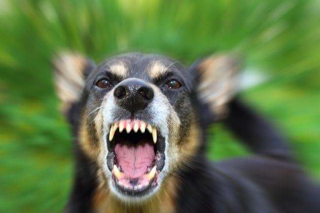 Types of Dog Aggression