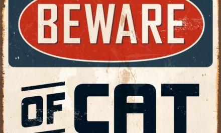 Why Cats Scratch:  Understanding the Behavior