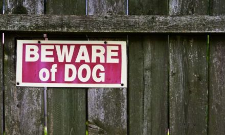 Why Do Dogs Bite: Understanding the Behavior