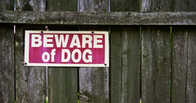 beware of dog sign on a wooden fence