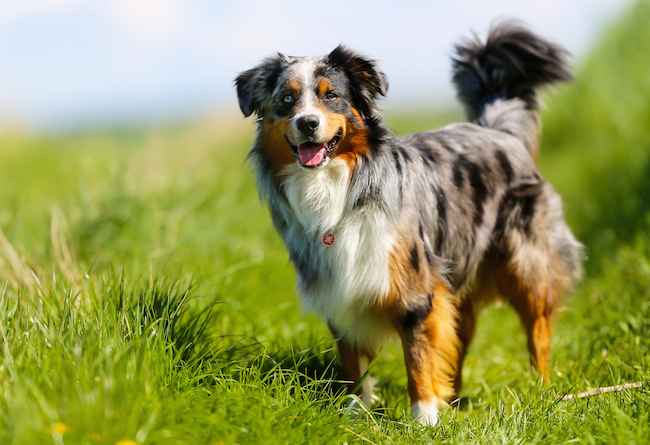 The Best Dogs for Children