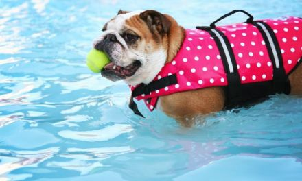 Pool Rules for Pups