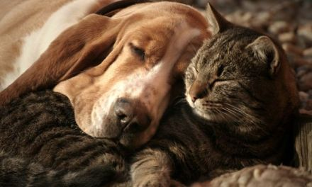 Pet Pheromone Treatments
