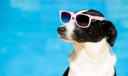 10 Ways to Beat the Heat with Your Pet this Summer