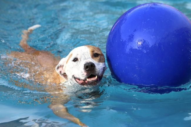 Water – A Summertime Threat to Pets