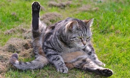 Yoga Posing Pets
