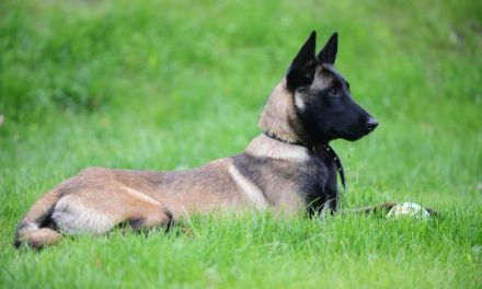 Dog Breeds With the Fewest Health Problems