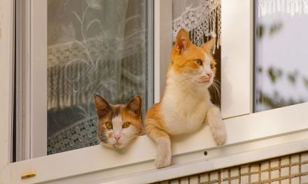5 Reasons to Keep Your Cat Indoors
