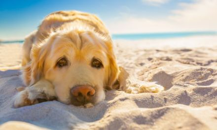 Summertime Hazards for Pets