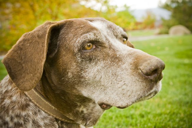 Old(er) dogs are more mild-mannered, and make great first pets for young children.
