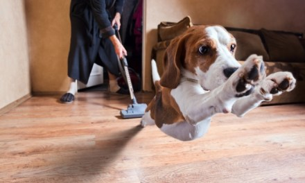 Tips For Keeping Your House Clean With Pets
