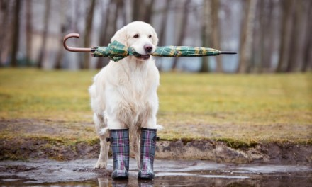 How Dogs Know When a Storm is Coming