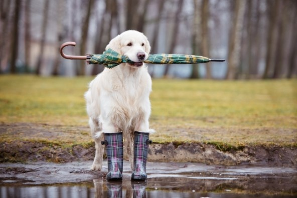 How Dogs Know When a Storm is Coming - Pawversity