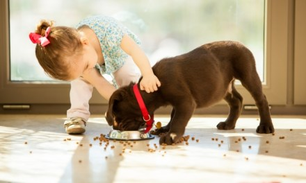 Why a Dog Might Bite a Child
