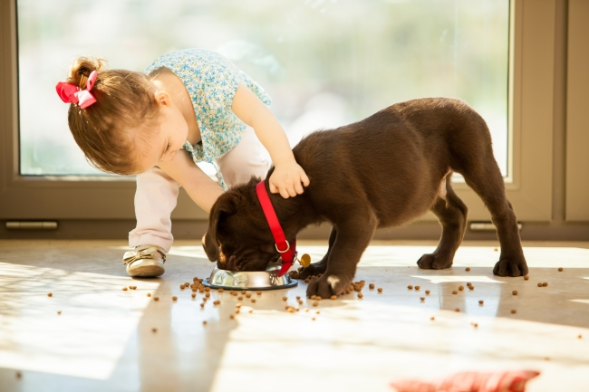 Dogs are protective of their food, so it's best to leave them alone while they are eating.