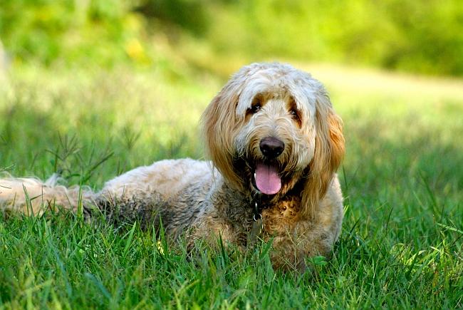 Best Dog Breeds for Infants