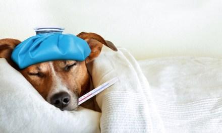 Canine Body Temperature
