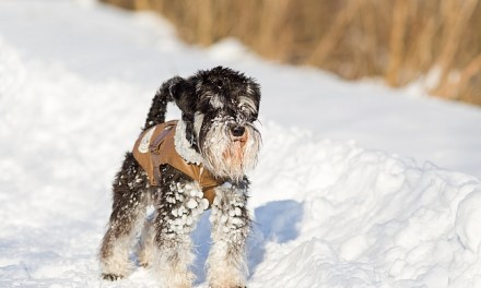 The 5 Best Pet Care Products For Winter