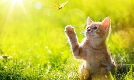 Cats and Butterflies