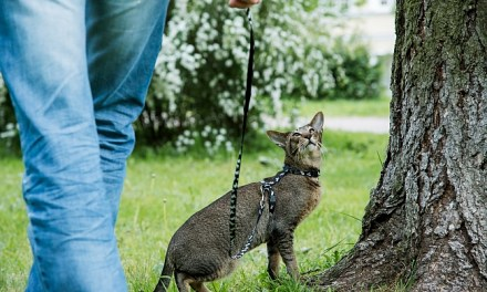 Should You Walk Your Cat on A Leash?
