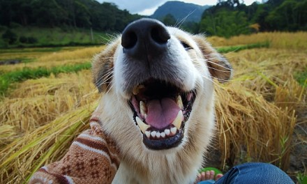 Why Do Dogs Have Black Gums? Assessing A Canine's Gum Health