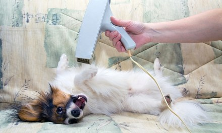 10 Weird Things Dogs Love