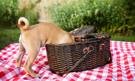 5 Picnic Tips for Pet Owners