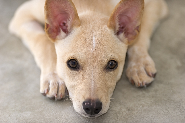Why You Should Care About Ear Care for Pets